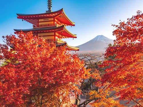 和歌山県にある部分脱毛ができる脱毛サロン&医療クリニック一覧《2021最新版》