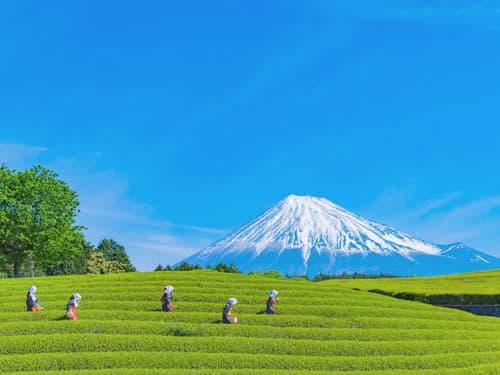 静岡県にある部分脱毛ができる脱毛サロン&医療クリニック一覧《2021最新版》