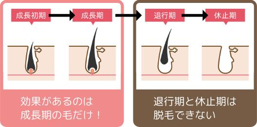 毛周期とは